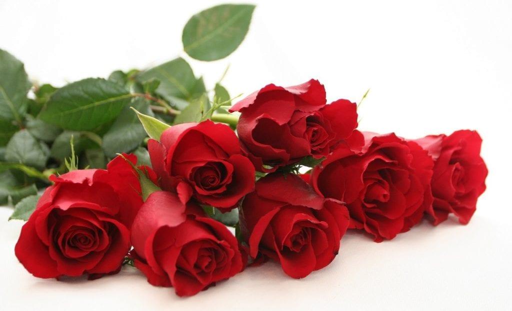 Image result for τριανταφυλλα