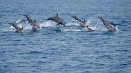 Τα δελφίνια στην αρχαία Ελλάδα