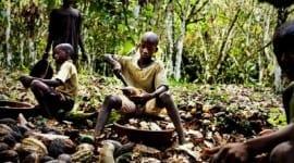 Τα παιδιά της πικρής σοκολάτας Σύγχρονοι σκλάβοι