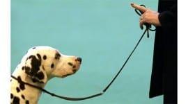 Ψυχολογία & Σκύλος