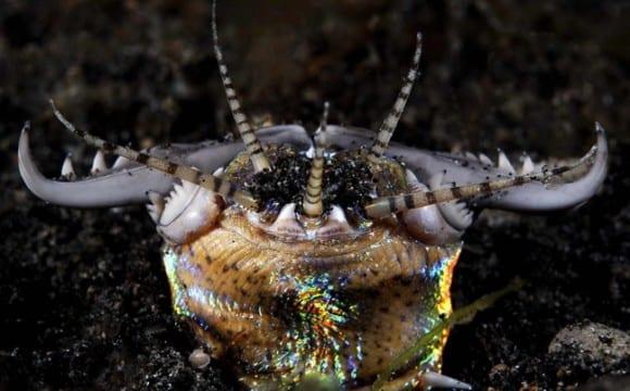 Πλάσματα του βυθού με τρομακτικά δόντια